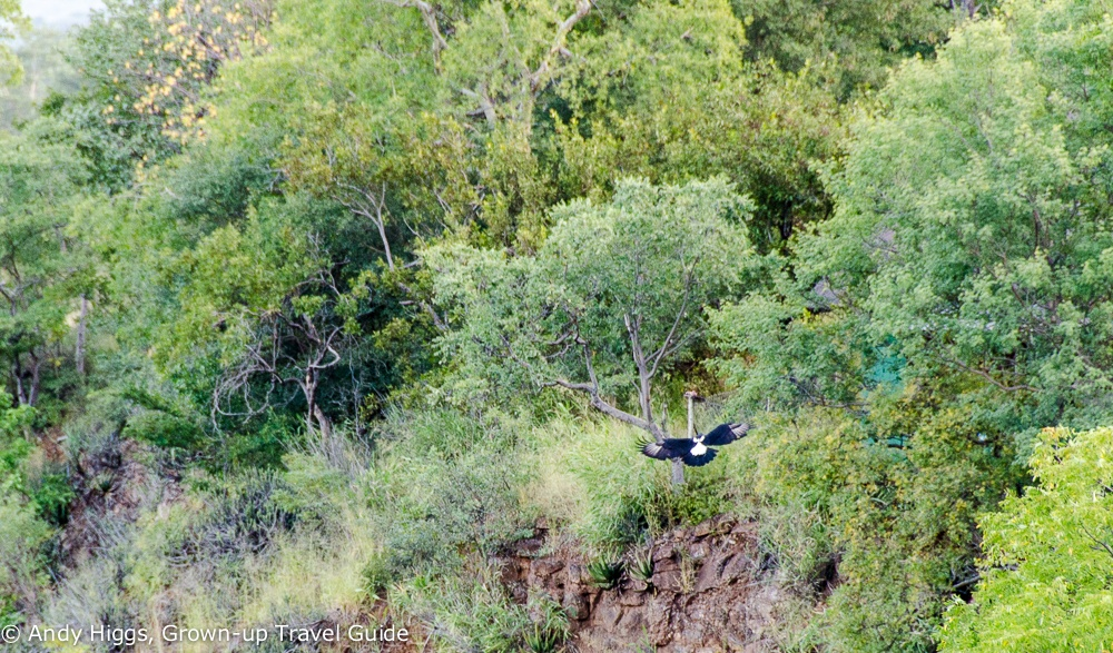 Eagle at Gorges Lodge