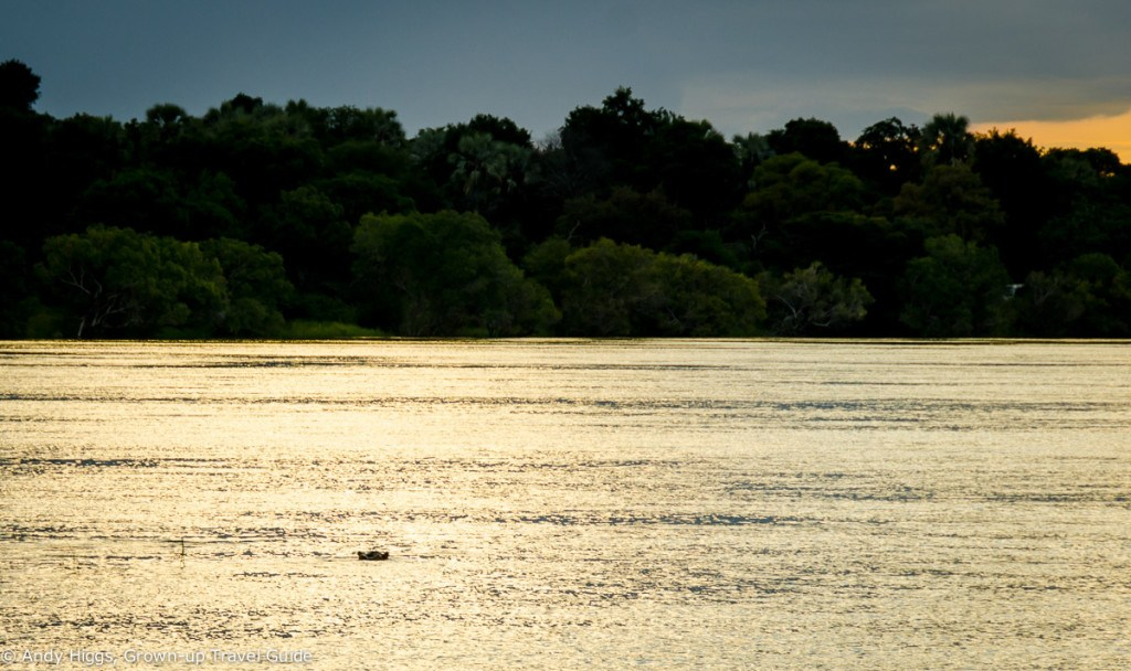 Easy to miss this hippo watching us pass on a sunset cruise on the Zambezi in Zimbabwe