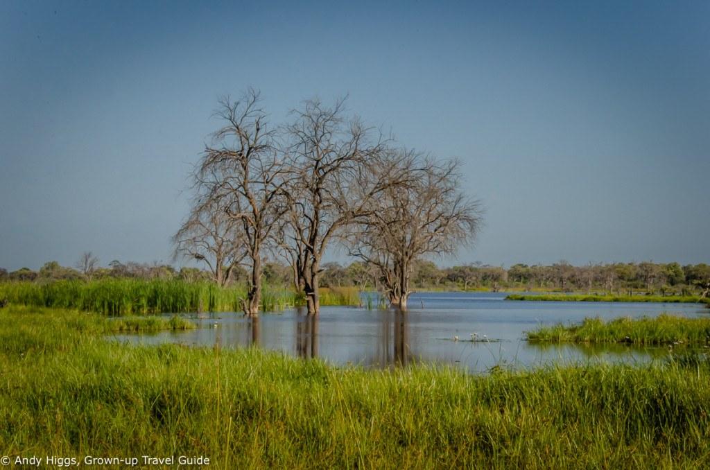 Dead trees in water