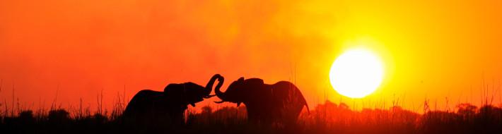 sunway_botswana_chobe_elephants_sunset_henry_bell_20111020_1900625663