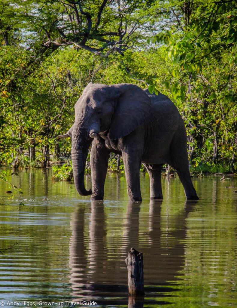 Elephant near tents Hyena Pan