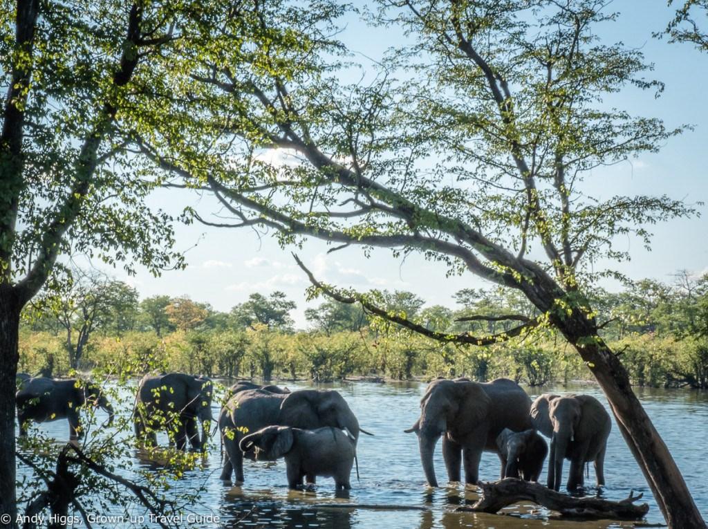 More elephants arrive Hyena Pan