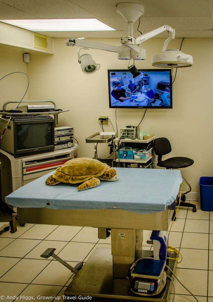 Turtle Hospital 1
