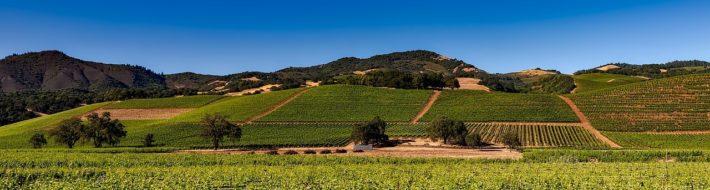 vineyards-1590014_1280